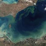 256px-Toxic_Algae_Bloom_in_Lake_Erie