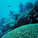 Coral_Reef_(8424234521)
