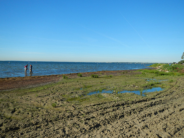 Muck: Yucking up the shoreline in Saginaw Bay (Vijay Kannappan/NOAA)