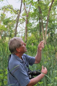 Int0029 Gary Sullivan dentifying a sedge.1