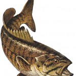 Smallmouth bass. Micropterus dolomieui.