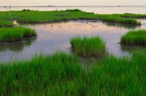 wetlands_066